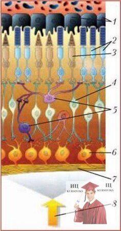біотехнологічні-процеси